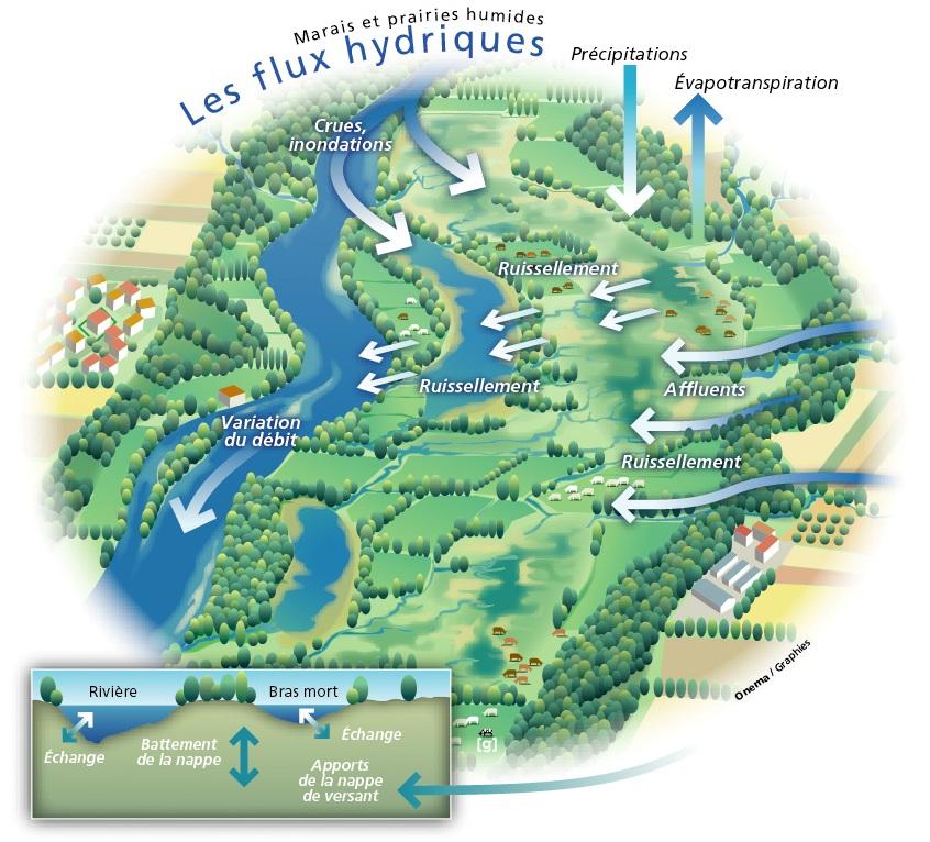Fonctions hydrologiques